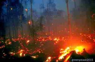 Press Release: Kebakaran Hutan dan Lahan: Bukan Bencana Alam, Awal Bencana Ekologi