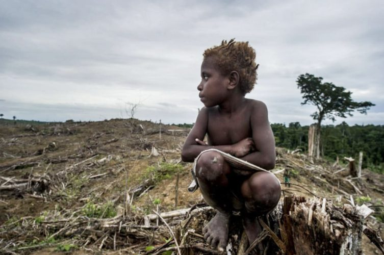 Pernyataan Sikap AMAN Kalimantan Tengah terkait Rencana Food Estate (Cetak Sawah)