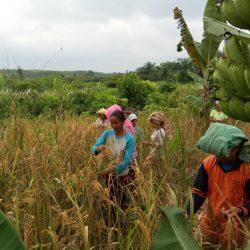 Kemunduran Negara dan Resiliensi Masyarakat Adat di Tengah Pandemi Covid-19